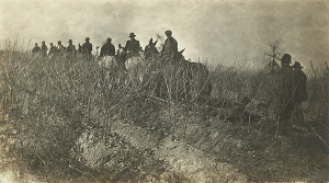 9 Mule Teams Digging Trees about 1905